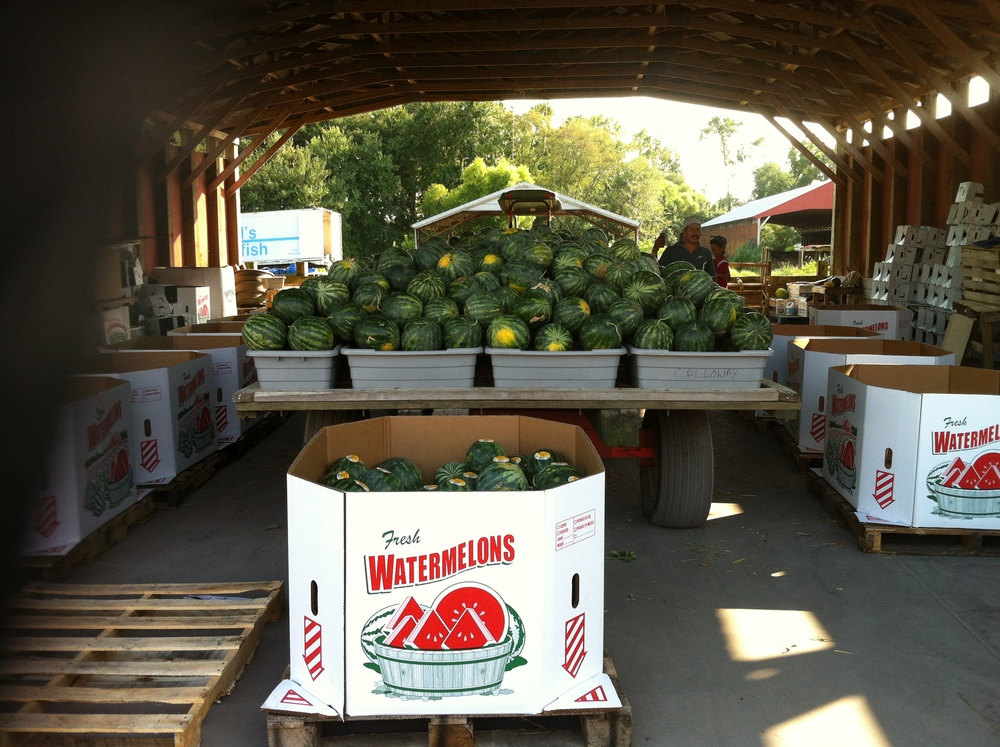 Watermelon packing area